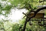 Londolozi Tree Camp Deck