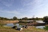 Ngala safari lodge drinks stop