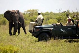 Ngala safari lodge elephant