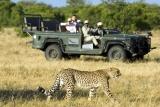 Ngala safari lodge game drive
