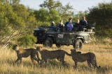Ngala tented camp game drive