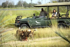 Wild dogs on game drive, Nxabega Okavango Tented Camp