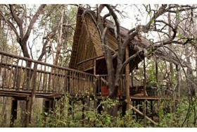 Exterior View of Tree House at Jaci's Tree Lodge
