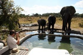 Somalisa poolside visitors