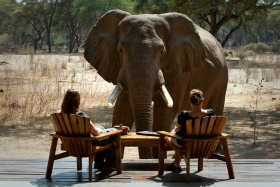 Old Mondoro elephant encounter