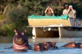 Chiawa hippo cruise