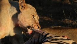 Five Lesser-Known Safari Destination Gems