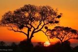 Fiery sunset at Kruger National Park