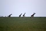 Plains game Kenya