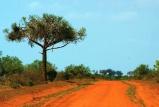 Red soil Tsavo