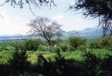 Tsavo-West-Mzima-Kenya