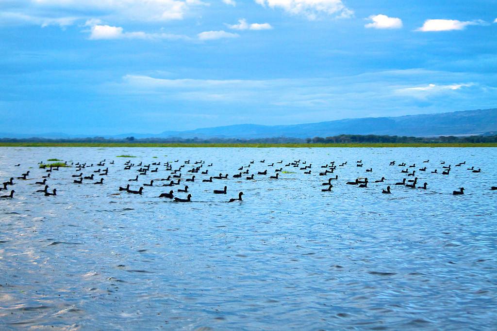 「Lake Naivasha」的圖片搜尋結果