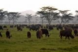 Game herds at masaai mara, Kenya