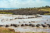 A sea of wildebeest, Great Migration, Kenya