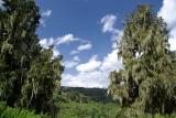 Aberdare np flora kenya