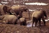 Elephant mudbath aberdare np kenya