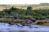 Huge pods of hippo at meru
