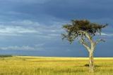 Wide open plains at Amboseli