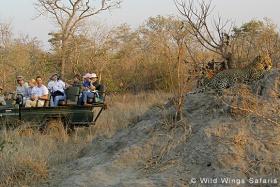 Timbavati Game Reserve