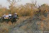 Open vehicle game drives in Timbavati Game Reserve