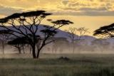 Acacia grasslands, Hluhluwe, KZN, South Africa