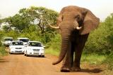 Elephant-hluhluwe-imfolosi