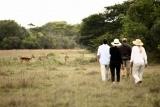 Bush walk at Phinda Game Reserve, KwaZulu-Natal