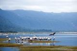Lake manyara birdlife