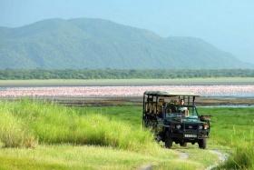Lake Manyara flamingos on game drive