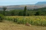 Views from Karatu
