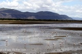 Flamingoes, Ngorongoro Crater floor