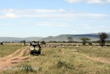 Game drives, Ngorongoro Crater floor