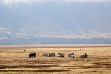 Game drive in Ngorongoro Crater