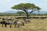 Serengeti game