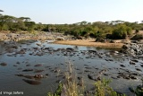Hippo pool in the Serengeti