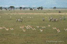 Balloon safari views