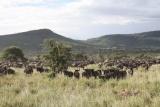 Game-rich Serengeti