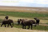 Elephants at Ngorongoro, Tanzania