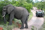 300-gamedrive-elephantbull