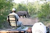 Rhino viewing in open safari vehicle