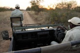 Klaserie game drives in open vehicles