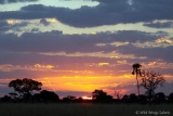 Spectacular dawn at Hwange