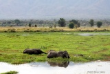 Elephants at Mana Pools