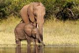 Elephant and her baby Lake Kariba