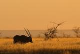 Gemsbok/Oryx silhouette