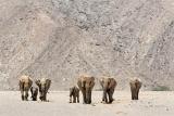 Namibia's famouse desert elephants