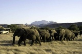 Wilderness-safaris-elephants