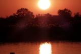 Hippo sunset, kavango river