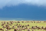 Herds under stormy skies