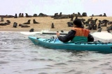 Kayaking with seals
